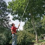 TREE PRUNER